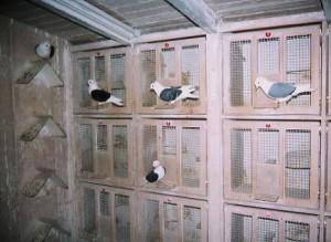 Nistzellen und Dachreiter (links) gehören zur Standardausstattung des Zuchtschlages